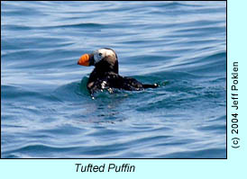 Tufted Puffin, photo by Jeff Poklen