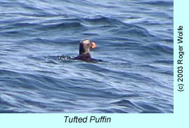 Tufted Puffin, photo by Roger Wolfe